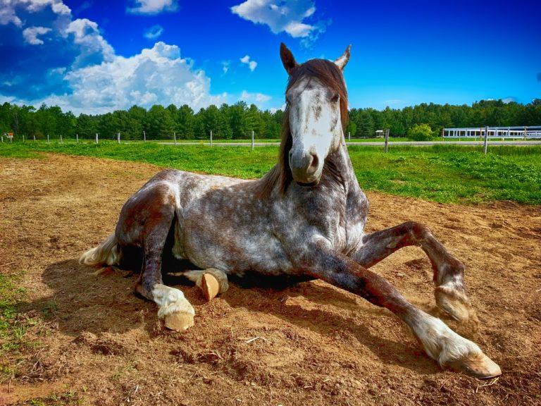 Pielęgnacja końskich kopyt – Czemu jest tak ważna