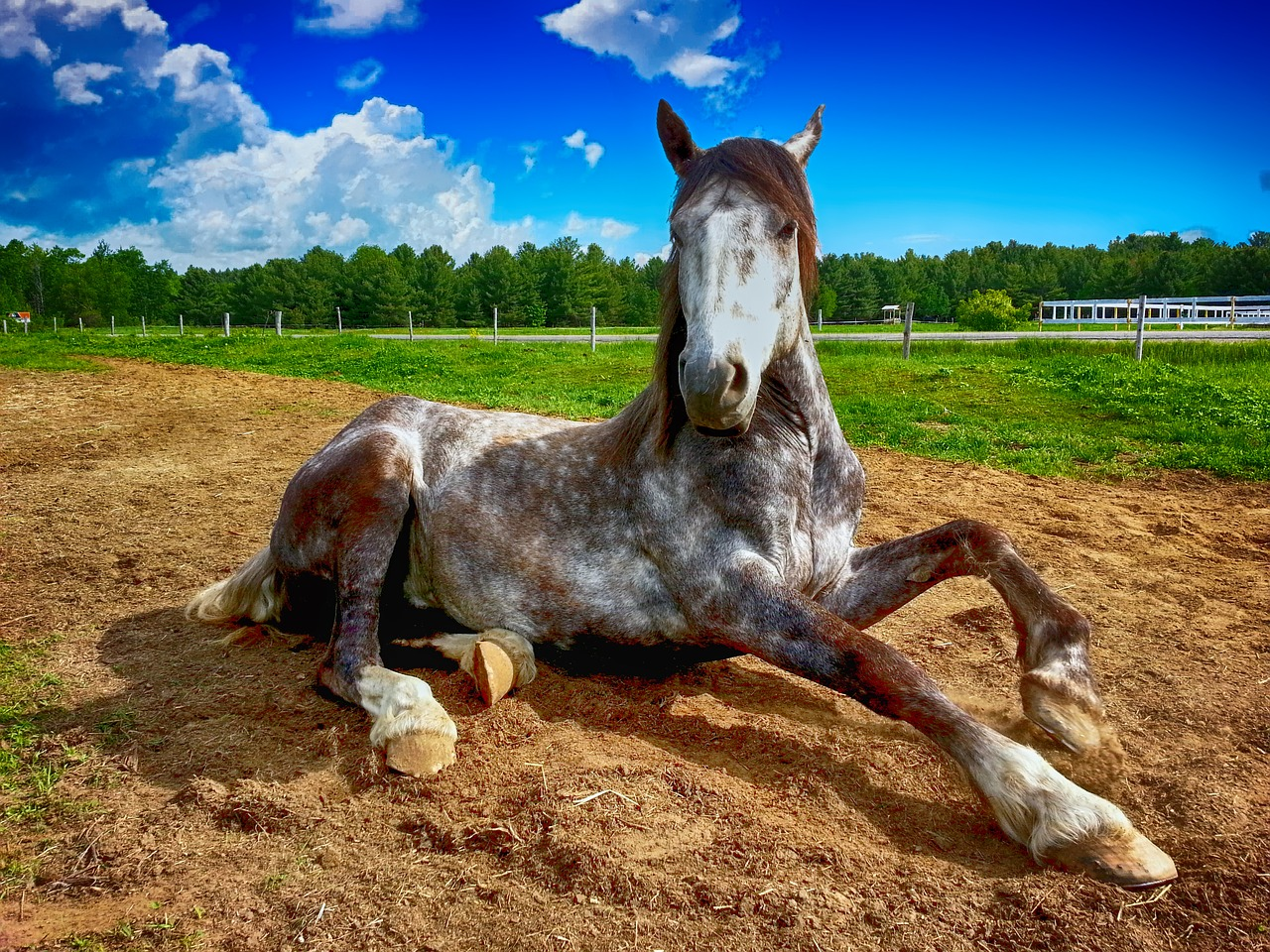 pielęgnacja końskich stóp