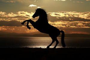 Rząd koński – z czego się składa wyposażenie dla konia?