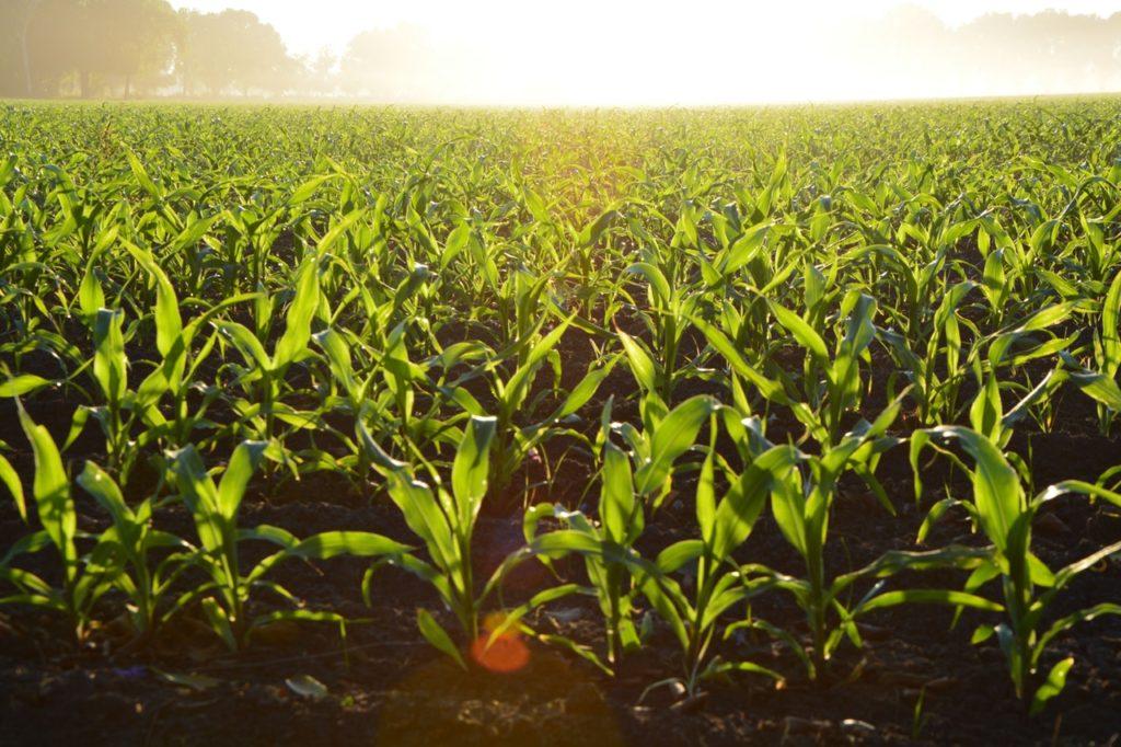 rolnictwo zrównoważone