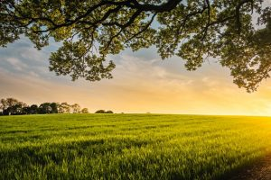 Nawozy azotowe – podstawowe informacje, zastosowanie, nawożenie